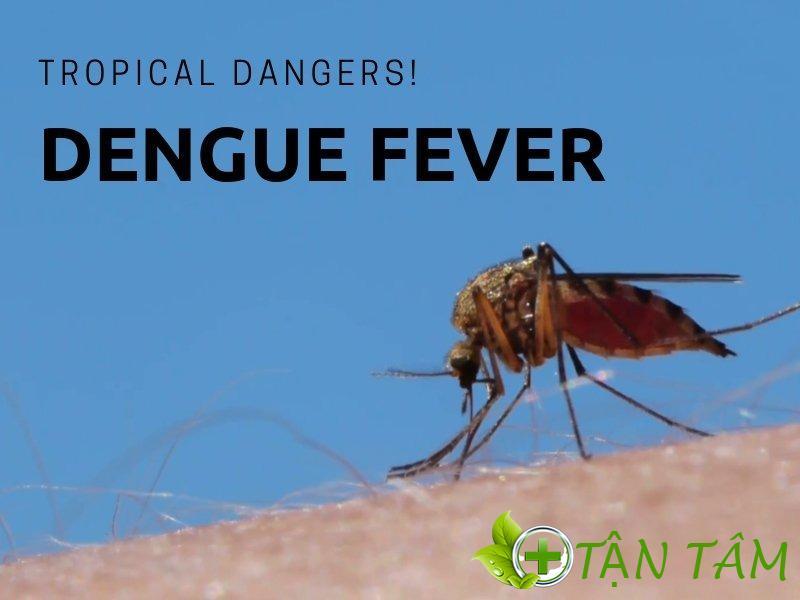 Bệnh Sốt xuất huyết tiếng anh là gì ? Nguyên nhân, cách phòng và điều trị của bệnh sốt xuất huyết