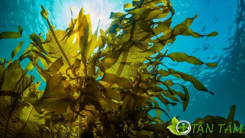 Tại Trung Quốc, Mannitol được sản xuất chủ yếu là áp dụng quá trình cô lập từ rong biển